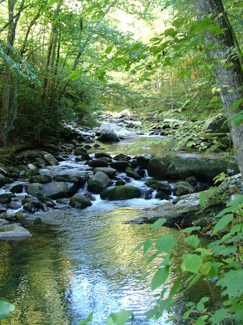 Smoky Mountains 030