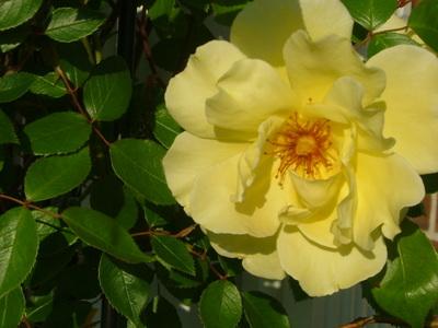 Spring_2008_014