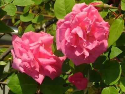 Spring_2008_019